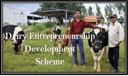 Dairy Entrepreneurship Development Scheme DEDS Apply Loan